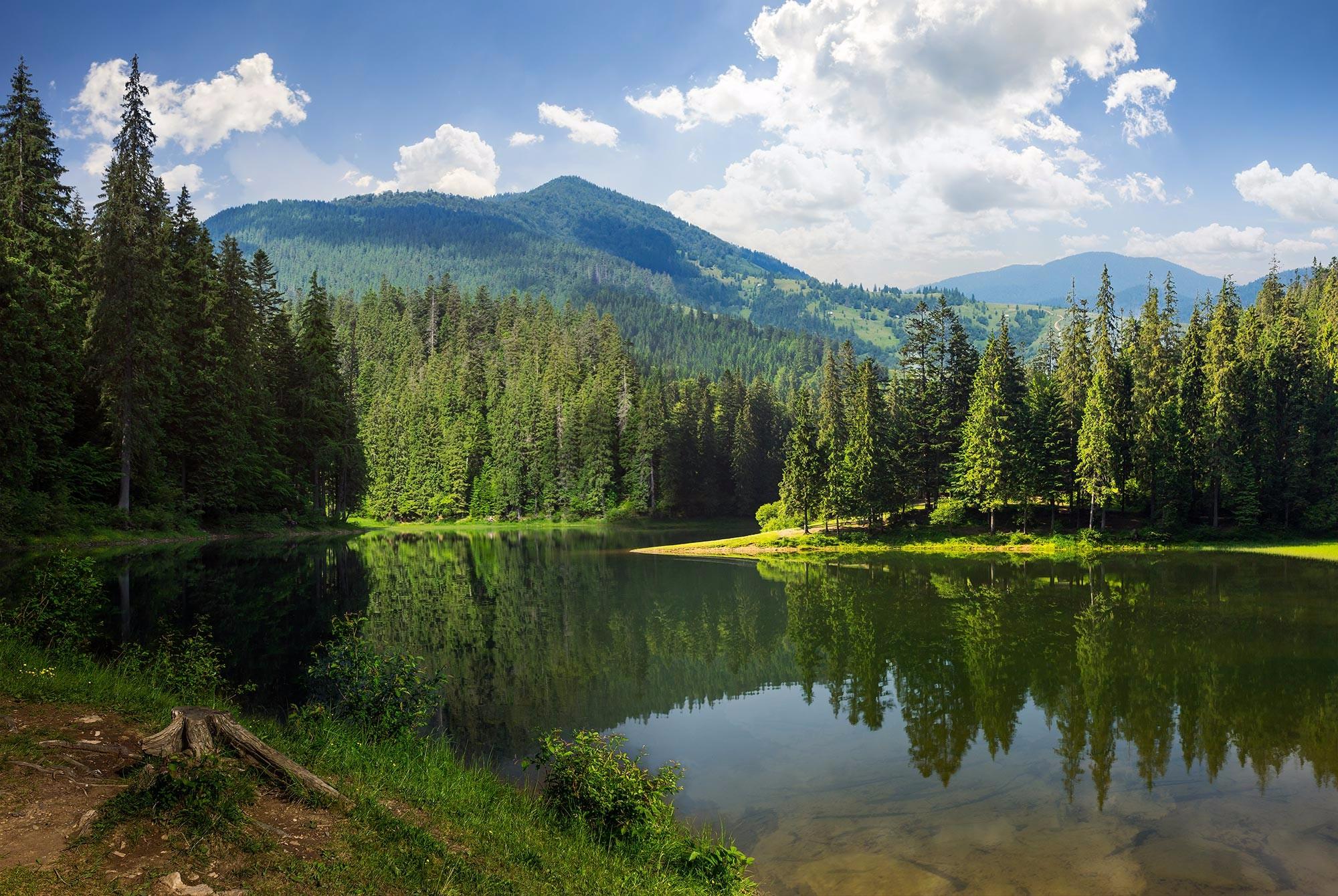 lake-trees_redux